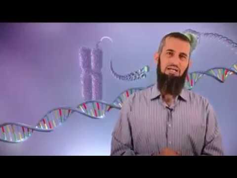 ملحق لحلقة ١٨: حساب طول المادة الوراثية